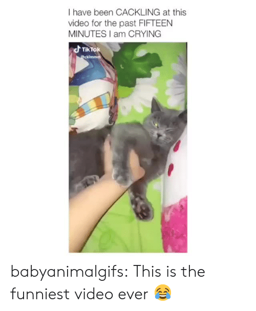 Crying, Tumblr, and Blog: I have been CACKLING at this  video for the past FIFTEEN  MINUTES I am CRYING  d TikTok babyanimalgifs:  This is the funniest video ever 😂