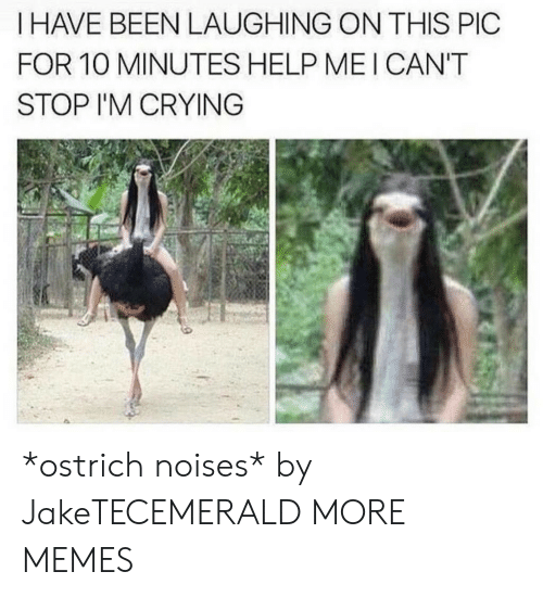 Crying, Dank, and Memes: I HAVE BEEN LAUGHING ON THIS PIC  FOR 10 MINUTES HELP MEI CAN'T  STOP I'M CRYING *ostrich noises* by JakeTECEMERALD MORE MEMES