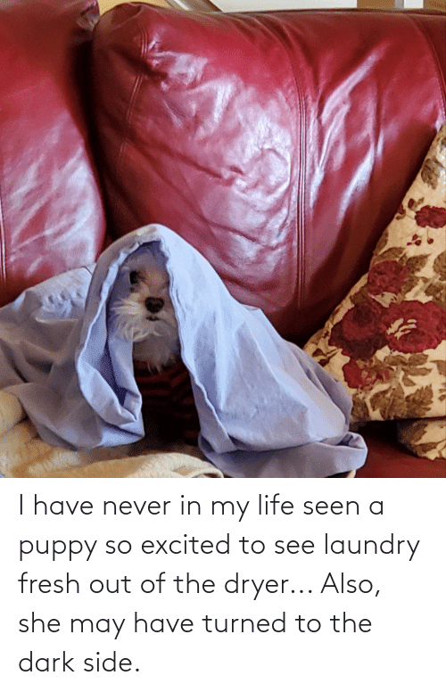 Laundry: I have never in my life seen a puppy so excited to see laundry fresh out of the dryer... Also, she may have turned to the dark side.