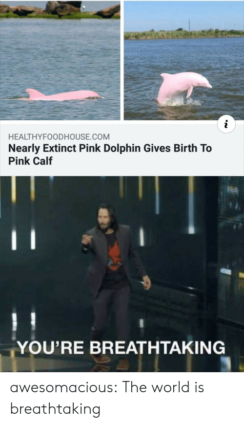 Tumblr, Blog, and Dolphin: i  HEALTHYFOODHOUSE.COM  Nearly Extinct Pink Dolphin Gives Birth To  Pink Calf  YOU'RE BREATHTAKING awesomacious:  The world is breathtaking
