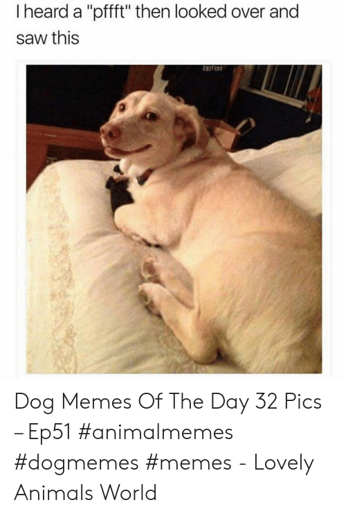 "Animals, Memes, and Saw: I heard a ""pfft"" then looked over and  saw this Dog Memes Of The Day 32 Pics – Ep51 #animalmemes #dogmemes #memes - Lovely Animals World"