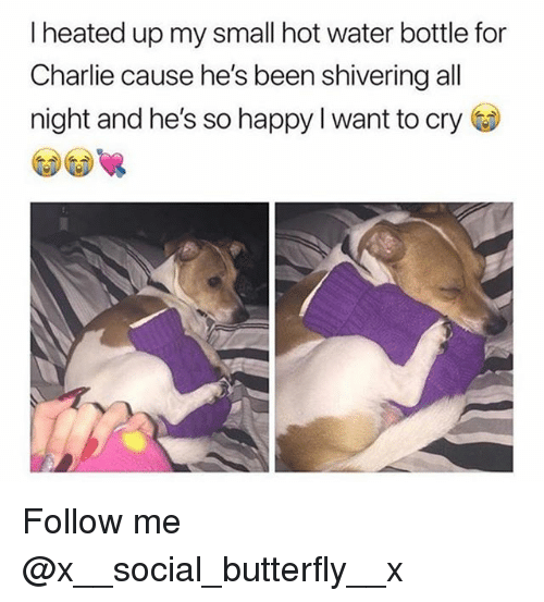 Charlie, Memes, and Butterfly: I heated up my small hot water bottle for  Charlie cause he's been shivering all  night and he's so happy l want to cry Follow me @x__social_butterfly__x