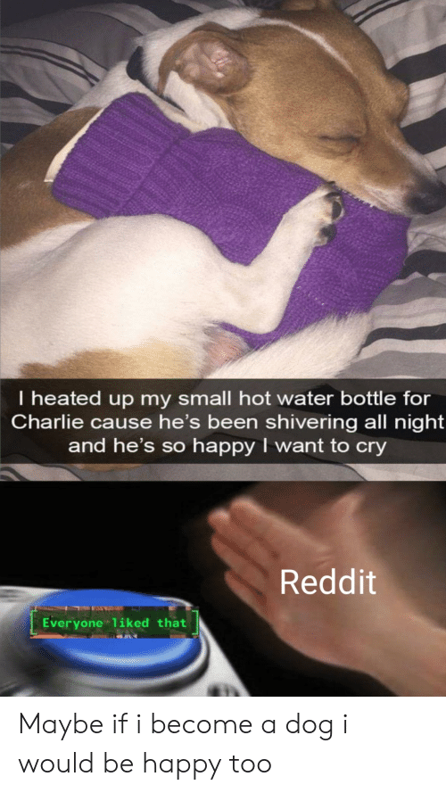 water bottle: I heated up my small hot water bottle for  Charlie cause he's been shivering all night  and he's so happy I want to cry  Reddit  Everyone liked that Maybe if i become a dog i would be happy too