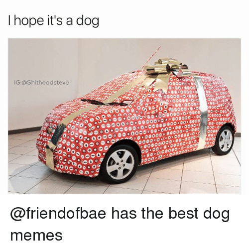 Dog Meme: I hope it's a dog  IG:ashitheadsteve  OG O  50 000 @friendofbae has the best dog memes