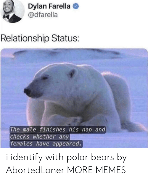 Identify: i identify with polar bears by AbortedLoner MORE MEMES