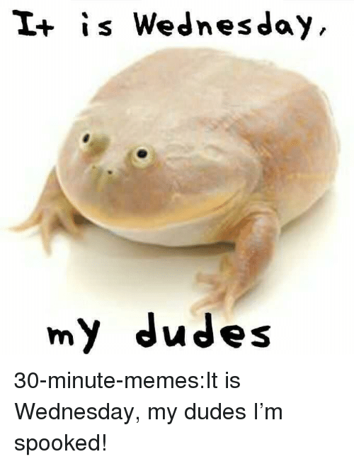 It Is Wednesday: I+ is Wednesday  my dudes 30-minute-memes:It is Wednesday, my dudes I'm spooked!
