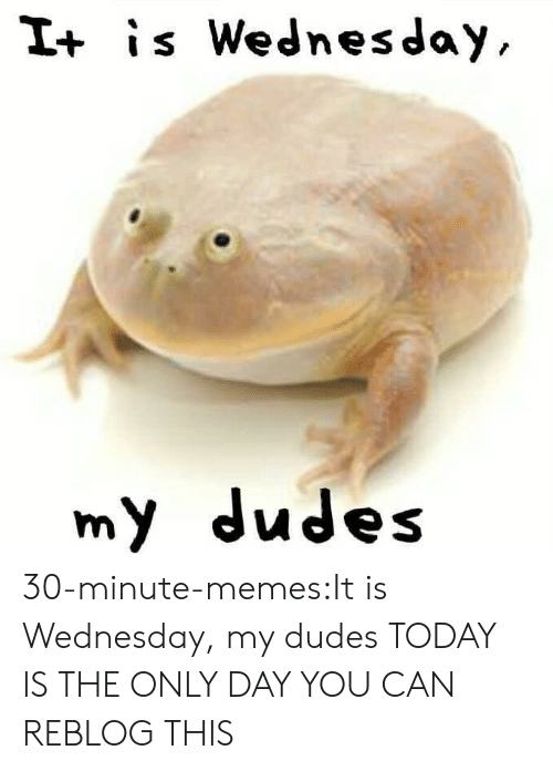 It Is Wednesday: I+ is Wednesday  my dudes 30-minute-memes:It is Wednesday, my dudes TODAY IS THE ONLY DAY YOU CAN REBLOG THIS