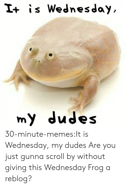 It Is Wednesday: I+ is Wednesday  my dudes 30-minute-memes:It is Wednesday, my dudes Are you just gunna scroll by without giving this Wednesday Frog a reblog?