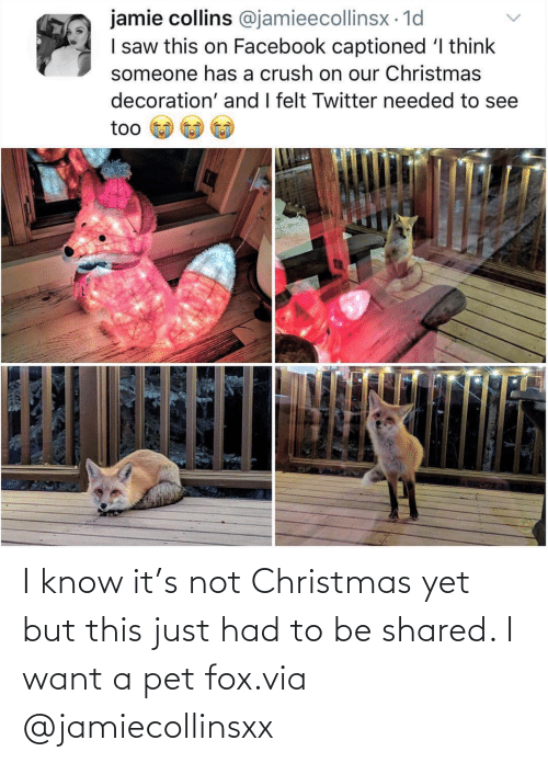 fox: I know it's not Christmas yet but this just had to be shared. I want a pet fox.via @jamiecollinsxx