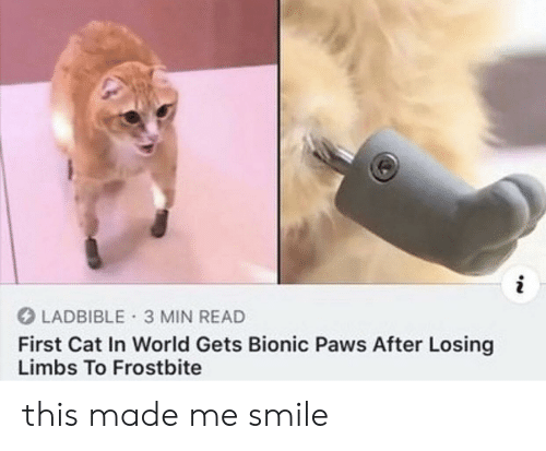 In World: i  LADBIBLE 3 MIN READ  First Cat In World Gets Bionic Paws After Losing  Limbs To Frostbite this made me smile