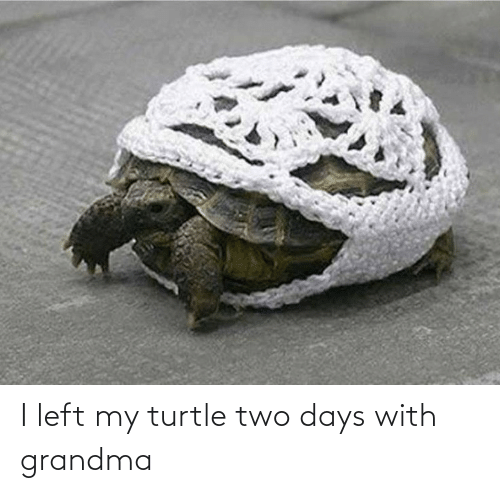 left: I left my turtle two days with grandma