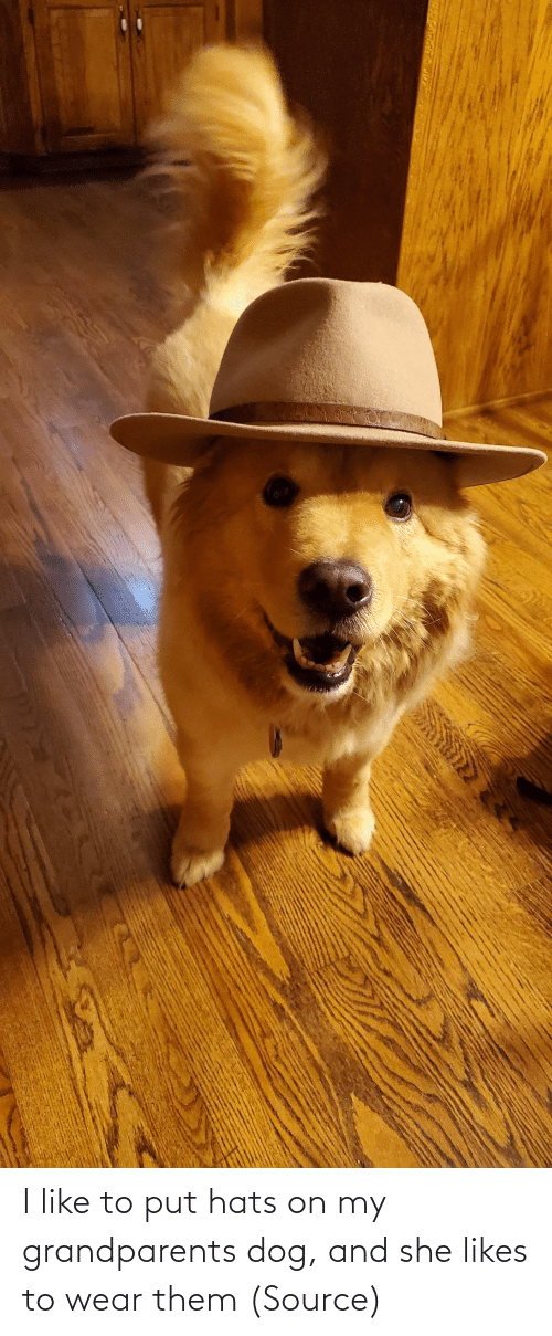 she: I like to put hats on my grandparents dog, and she likes to wear them (Source)