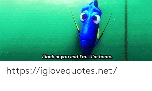 Home, Net, and You: I look at you and I'm... I'm home. https://iglovequotes.net/