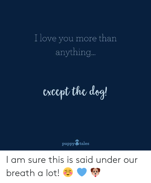 Love, Memes, and I Love You: I love you more than  anything  cxcept the dez!  puppy tales I am sure this is said under our breath a lot!  ☺️  💙  🐶
