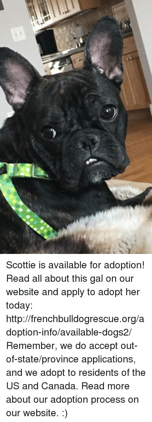 Memes, Canada, and 🤖: I m?h1 Scottie is available for adoption! Read all about this gal on our website  and apply to adopt her today: http://frenchbulldogrescue.org/adoption-info/available-dogs2/  Remember, we do accept out-of-state/province applications, and we adopt to residents of the US and Canada. Read more about our adoption process on our website. :)