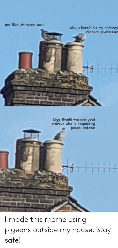 pigeons: I made this meme using pigeons outside my house. Stay safe!