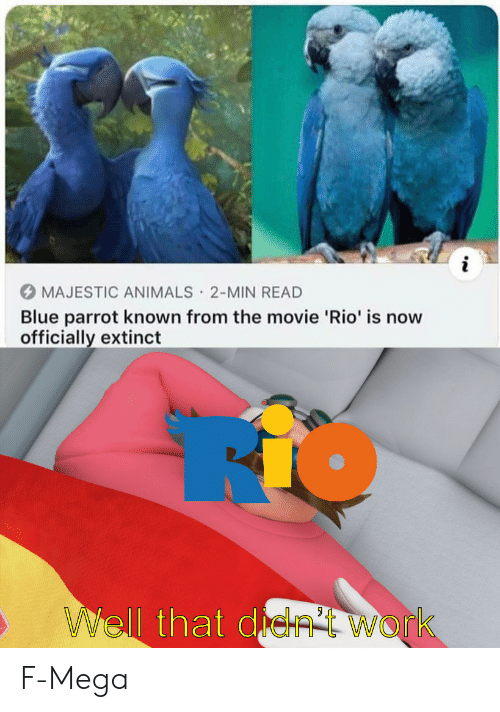 Extinct: i  MAJESTIC ANIMALS 2-MIN READ  Blue parrot known from the movie 'Rio' is now  officially extinct  .  WWell that de  Work F-Mega