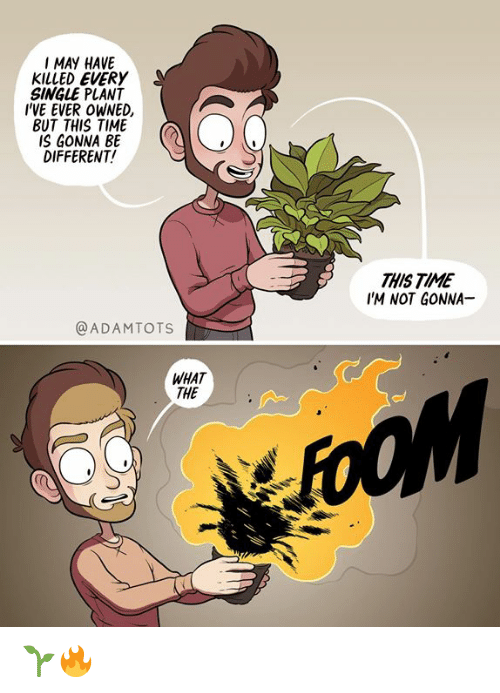 Memes, Time, and Single: I MAY HAVE  KILLED EVERY  SINGLE PLANT  I'VE EVER OWNED,  BUT THIS TIME  IS GONNA BE  DIFFERENT!  THIS TIME  IM NOT GONNA  @ADAMTOTS  WHAT  THE 🌱🔥