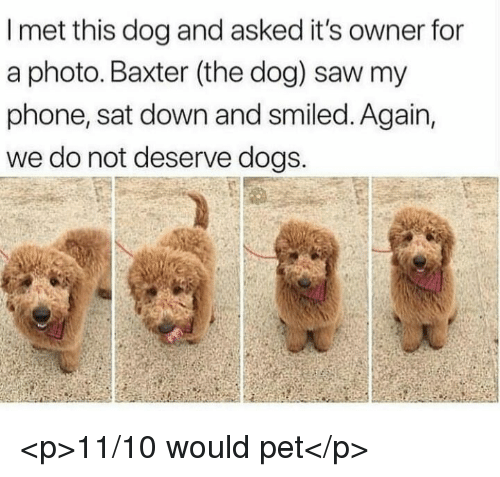 Dogs, Phone, and Saw: I met this dog and asked it's owner for  a photo. Baxter (the dog) saw my  phone, sat down and smiled. Again,  we do not deserve dogs. <p>11/10 would pet</p>