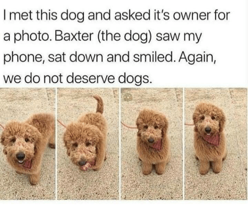 Dogs, Phone, and Saw: I met this dog and asked it's owner for  a photo. Baxter (the dog) saw my  phone, sat down and smiled. Again,  we do not deserve dogs.