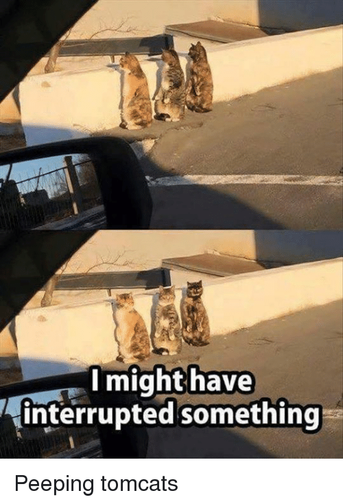 memes: I might have  interrupted something Peeping tomcats