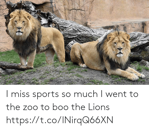 boo: I miss sports so much I went to the zoo to boo the Lions https://t.co/lNirqQ66XN