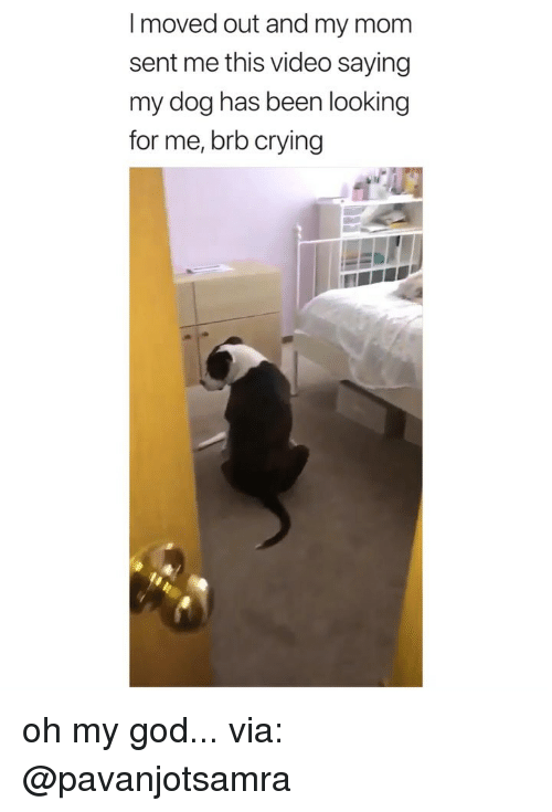 Crying, God, and Oh My God: I moved out and my mom  sent me this video saying  my dog has been looking  for me, brb crying oh my god... via: @pavanjotsamra