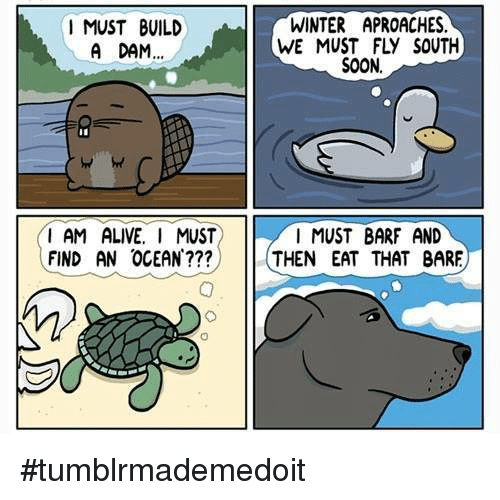 Barfing: I MUST BUILD  A DAM...  I AM ALIVE. I MUST  FIND AN OCEAN  WINTER APROACHES.  SOON.  I MUST BARF AND  THEN EAT THAT BARE #tumblrmademedoit