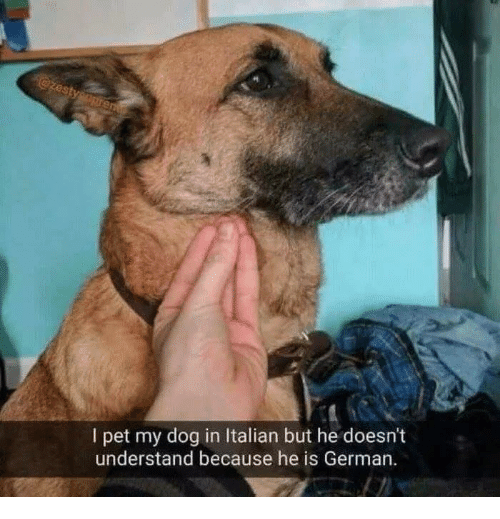 Dog, German, and Pet: I pet my dog in Italian but he doesn't  understand because he is German.