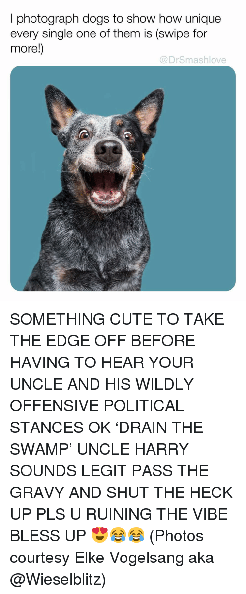 courtesy: I photograph dogs to show how unique  every single one of them is (swipe for  more!)  @DrSmashlove SOMETHING CUTE TO TAKE THE EDGE OFF BEFORE HAVING TO HEAR YOUR UNCLE AND HIS WILDLY OFFENSIVE POLITICAL STANCES OK 'DRAIN THE SWAMP' UNCLE HARRY SOUNDS LEGIT PASS THE GRAVY AND SHUT THE HECK UP PLS U RUINING THE VIBE BLESS UP 😍😂😂 (Photos courtesy Elke Vogelsang aka @Wieselblitz)