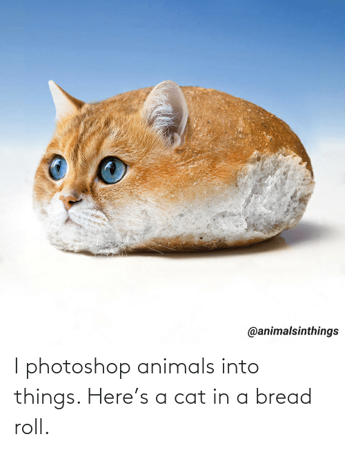 a cat: I photoshop animals into things. Here's a cat in a bread roll.