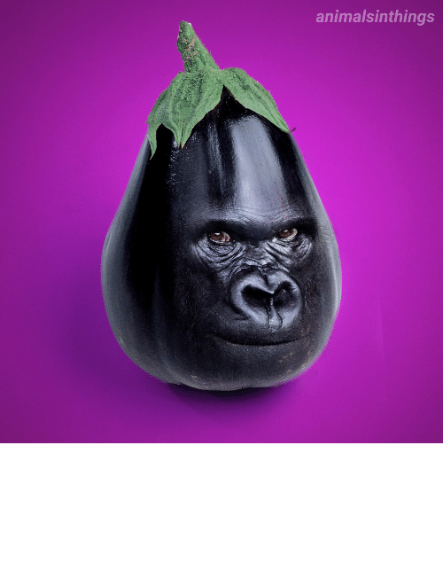 pleasure: I photoshopped a Gorilla into an Eggplant for your viewing pleasure.