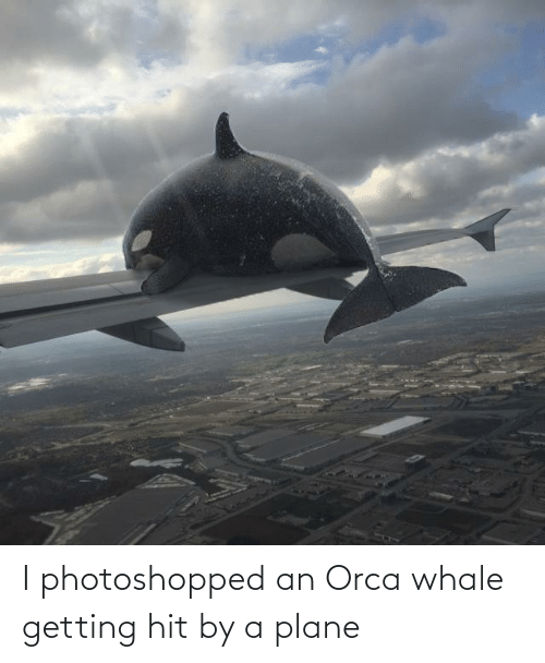 whale: I photoshopped an Orca whale getting hit by a plane