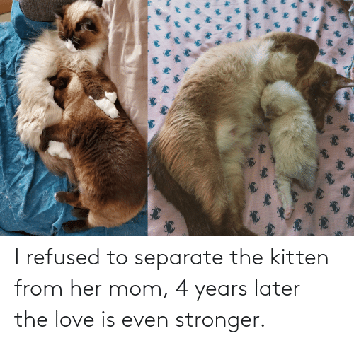 Love Is: I refused to separate the kitten from her mom, 4 years later the love is even stronger.