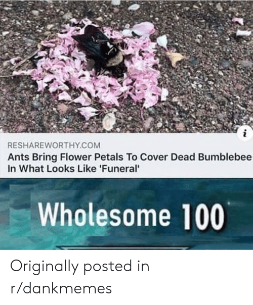 Flower, Wholesome, and Ants: i  RESHAREWORTHY.COM  Ants Bring Flower Petals To Cover Dead Bumblebee  In What Looks Like 'Funeral'  Wholesome 100  N Originally posted in r/dankmemes