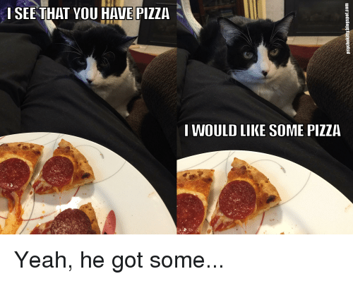 LOLcats: I SEE THAT YOU HAVE PIZZA  I WOULD LIKE SOME PIZZA Yeah, he got some...