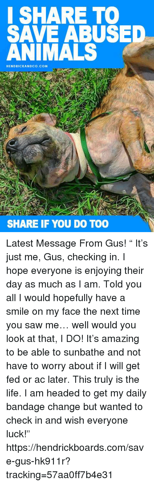 """Animals, Life, and Memes: I SHARE TO  SAVE ABUSED  ANIMALS  HENDRICKANDCO.COM  SHARE IF YOU DO TOO Latest Message From Gus! """" It's just me, Gus, checking in. I hope everyone is enjoying their day as much as I am.   Told you all I would hopefully have a smile on my face the next time you saw me… well would you look at that, I DO!  It's amazing to be able to sunbathe and not have to worry about if I will get fed or ac later. This truly is the life.  I am headed to get my daily bandage change but wanted to check in and wish everyone luck!""""  https://hendrickboards.com/save-gus-hk911r?tracking=57aa0ff7b4e31"""