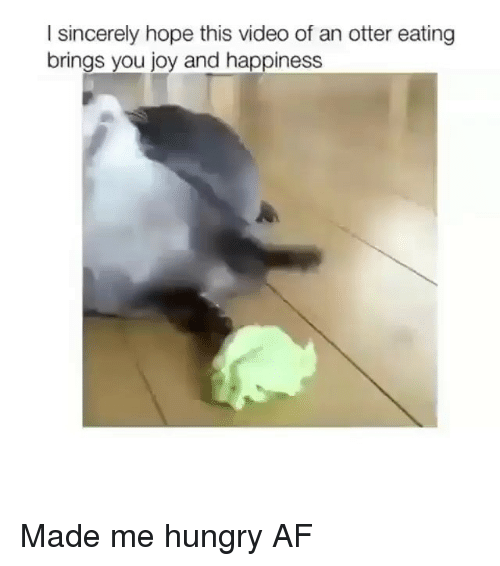 Af, Hungry, and Memes: I sincerely hope this video of an otter eating  brings you joy and happiness Made me hungry AF