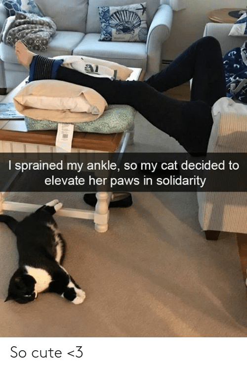 elevate: I sprained my ankle, so my cat decided to  elevate her paws in solidarity So cute <3