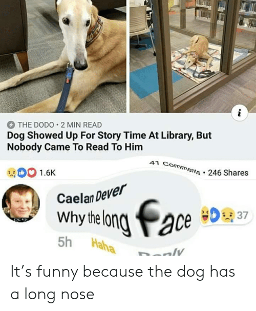Funny, Library, and Time: i  THE DODO 2 MIN READ  Dog Showed Up For Story Time At Library, But  Nobody Came To Read To Him  41 Comments.246 Shares  1.6K  Caelan Dever  Why helong ace  37  5h  Haha  ly It's funny because the dog has a long nose