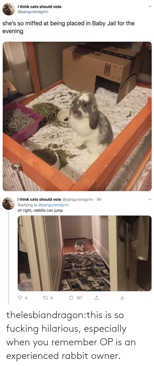Cats: i think cats should vote  @pangurandgrim  she's so miffed at being placed in Baby Jail for the  evening   i think cats should vote @pangurandgrim· 8h  Replying to @pangurandgrim  jump  oh right, rabbits can  li  27 6  197  4 thelesbiandragon:this is so fucking hilarious, especially when you remember OP is an experienced rabbit owner.