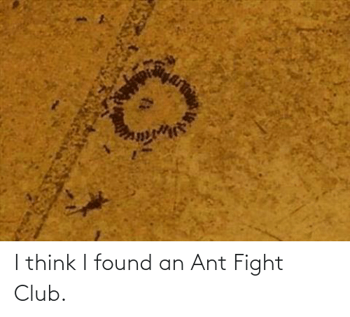 Fight: I think I found an Ant Fight Club.