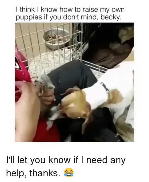 Memes, Puppies, and Help: I think I know how to raise my own  puppies if you don't mind, becky I'll let you know if I need any help, thanks. 😂