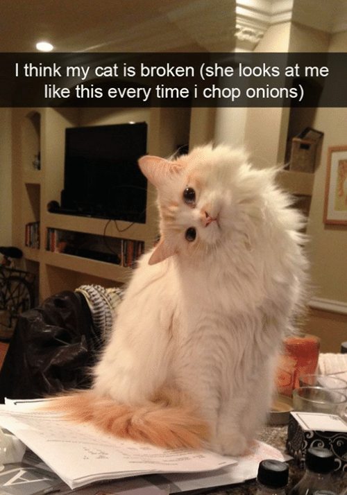 Memes, Time, and 🤖: I think my cat is broken (she looks at me  like this every time i chop onions)