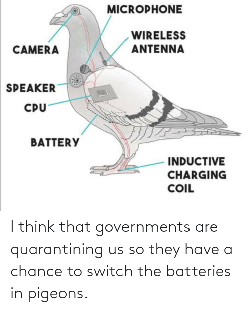 pigeons: I think that governments are quarantining us so they have a chance to switch the batteries in pigeons.