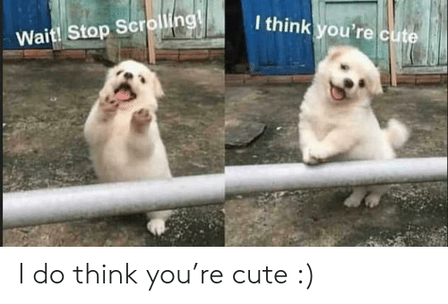 Cute, Think, and You: I think you're cute  Wait! Stop Scrolling! I do think you're cute :)