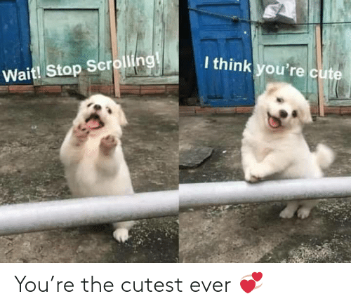 Cute, Think, and You: I think you're cute  Wait! Stop Scrolling! You're the cutest ever 💞