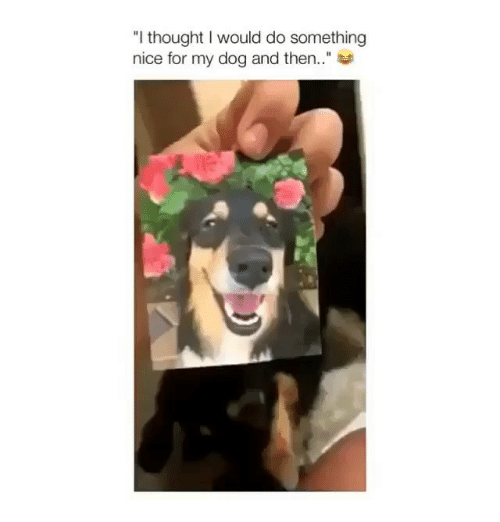 """Memes, Thought, and Nice: """"I thought I would do something  nice for my dog and then.."""""""