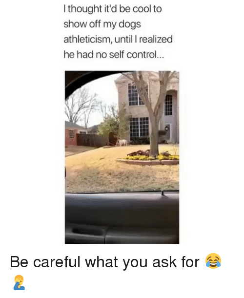 Dogs, Memes, and Control: I thought it'd be cool to  show off my dogs  athleticism, until I realized  he had no self control... Be careful what you ask for 😂🤦♂️