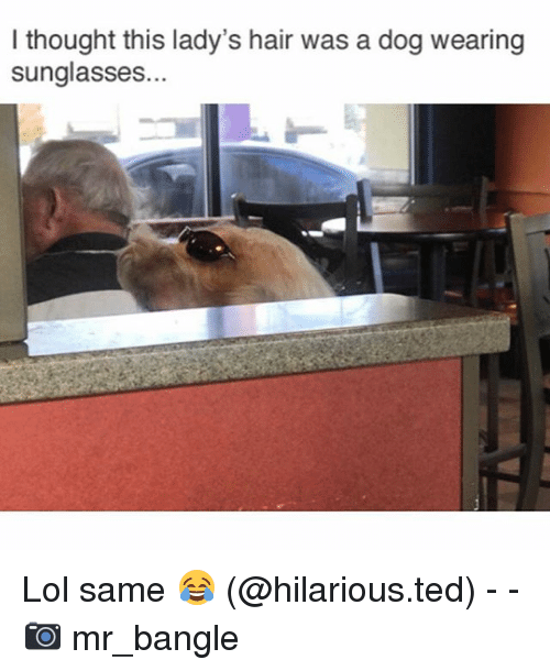 Funny, Lol, and Ted: I thought this lady's hair was a dog wearing  sunglasses.. Lol same 😂 (@hilarious.ted) - - 📷 mr_bangle